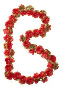 Basil bloemslinger rd